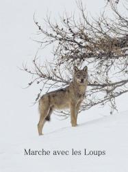 Affiche loups 1